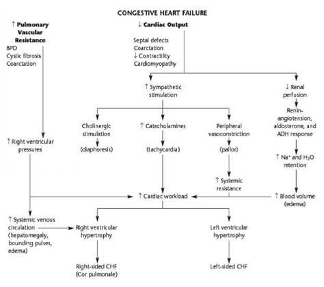 failure flowchart flow chart for congestive failure care plan