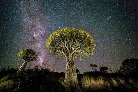 pictures astronomy photographer   year