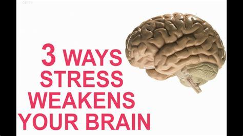 Brain Stress - 3 ways stress weakens your brain aol news