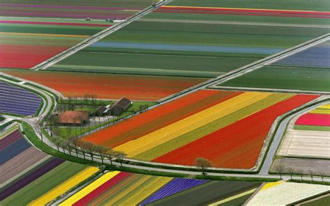 netherlands tulip fields wallpapers netherlands flower fields
