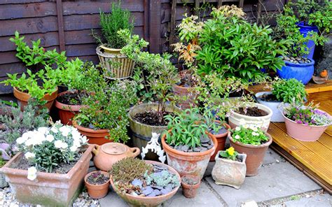 Garden Plant Pots How To Create A Low Maintenance Container Garden