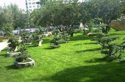 China Garden Moorhead by