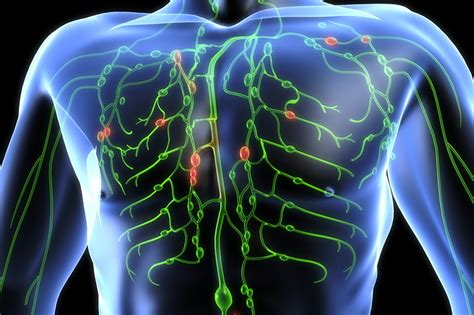 Detox Lymphatic System Naturally by How To Cleanse Your Lymphatic System And Fight 80 Of