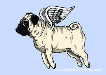 when pugs fly 146 best images about me my pug on