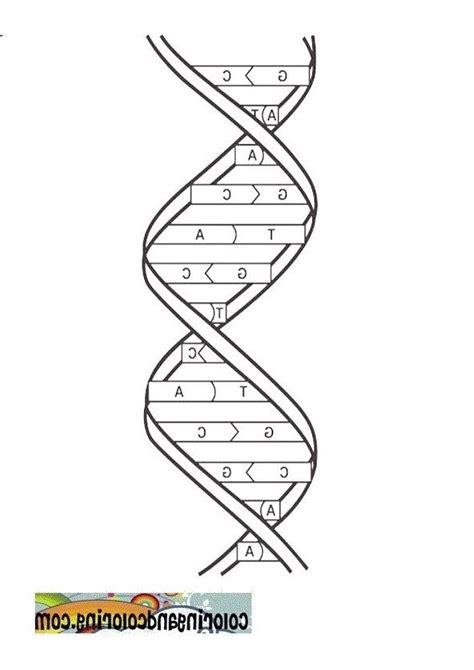coolest dna coloring sheet http coloring alifiah biz