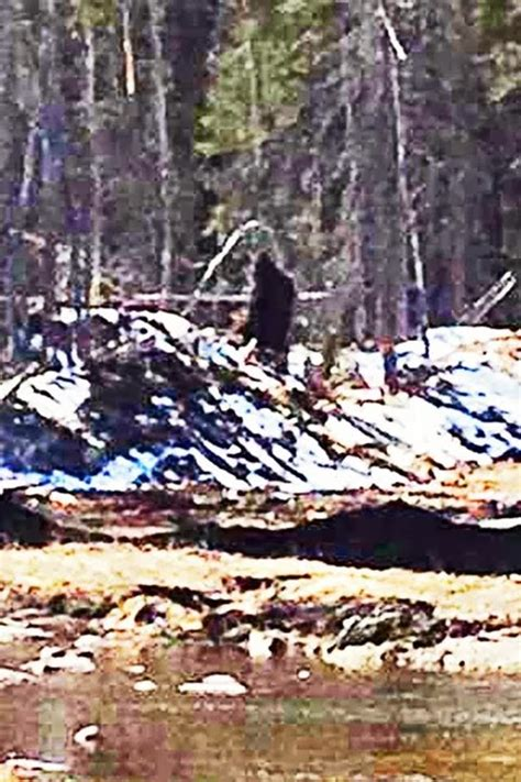 bigfoot evidence impressive  bigfoot photo