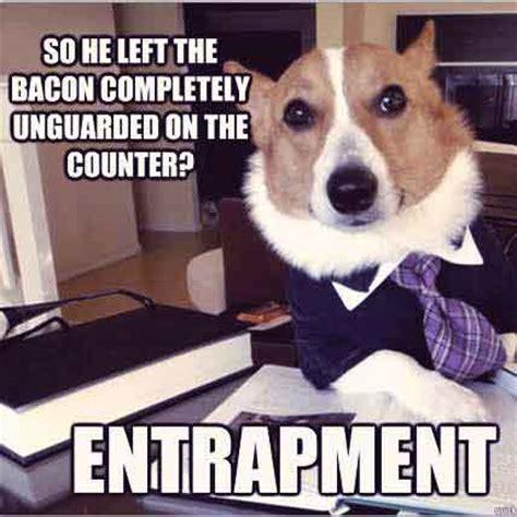 Internet Dog Meme - top five lawyer dog internet meme petcarerx