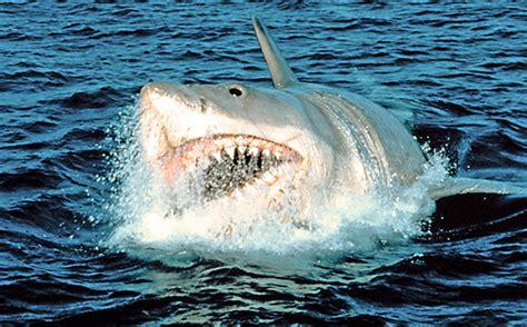 Kaos Keren Jaws 1975 Shark Classic 30 best summer blockbusters of all time ew