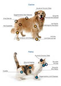 Bed And Breakfast Oahu Pet Laser Therapy Weston Florida Salinas Pet Healing And