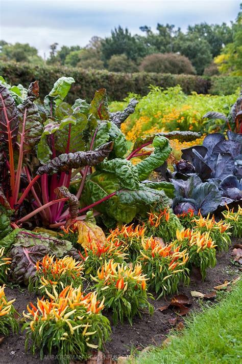 5 tips for kitchen gardening the purple turtles gardening tips for beginners ornamental vegetable gardens