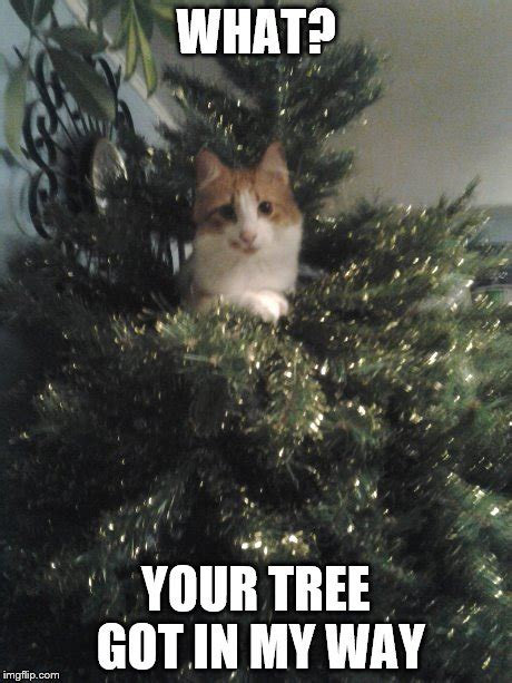 Cat Christmas Tree Meme - cats be like imgflip