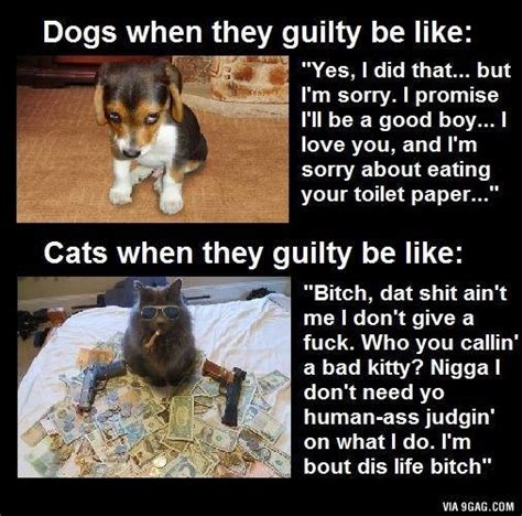 why dogs are better than cats why cats are better than dogs kaila yu
