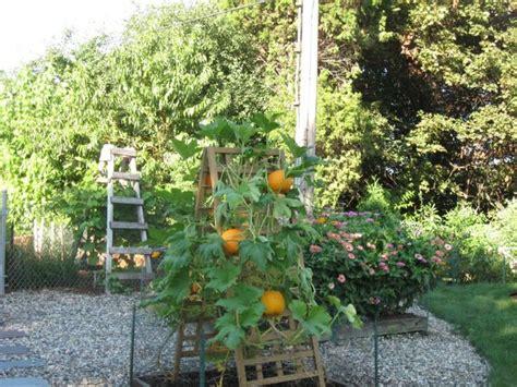 Pumpkin Trellis pumpkin trellis garden ideas