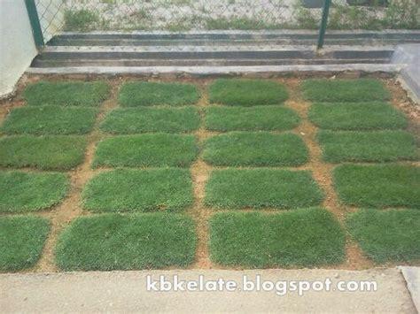 Karpet Rumput Murah rumput karpet murah rumput padang bersih kawasan rumah kota bharu kelantan rumput karpet