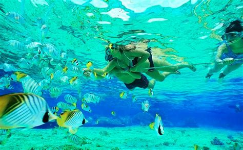 dive places 5 best places for snorkeling and scuba diving in florida