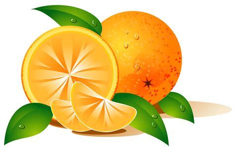 fruit vector vector fruits free vector 4vector