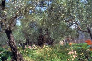 Garden Of Gethsemane Images by Blue Eyed Ennis The Garden Of Gethsemane 2012