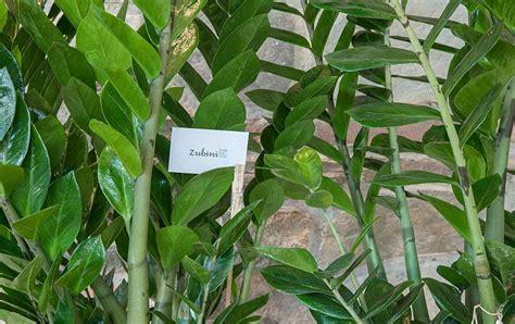 piante verdi da interno piante verdi da interno comorg net for