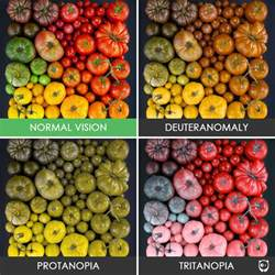different types of color blindness you ll be amazed how with color blindness see the