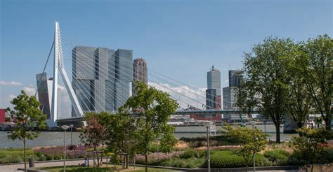 of rotterdam rotterdam 100 resilient cities