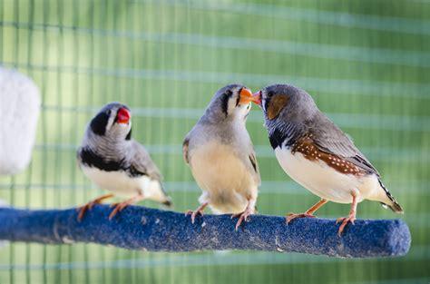 L Oiseau by Caract 233 Ristiques De L Oiseau Doctissimo