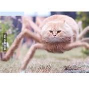 I Googled Weird Cat  9GAG