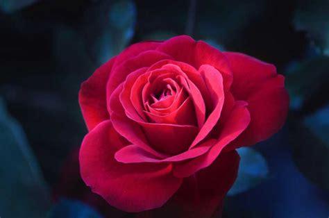 sognare un mazzo di fiori sognare interpretazione numeri sognipedia it