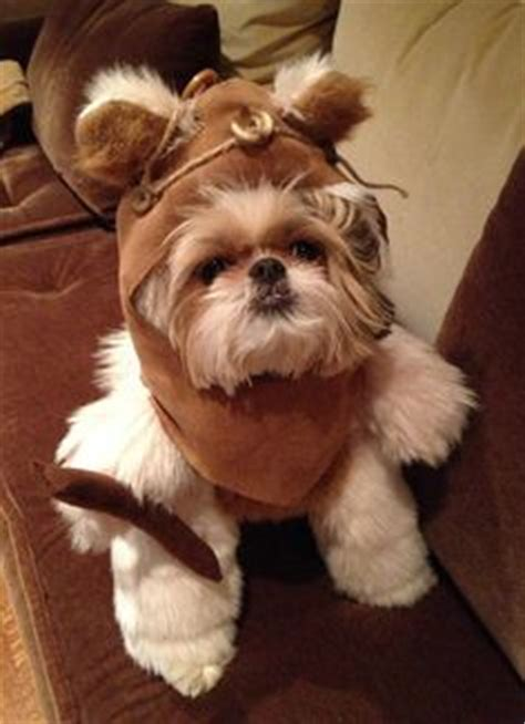 yorkie ewok costume 1000 ideas about ewok costume on costumes pet costumes and