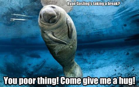 Give Me A Hug Meme - calming manatee memes quickmeme