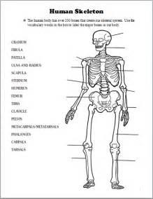 skeletal system human body