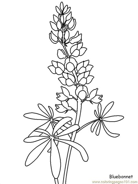 coloring pages of realistic flowers realistic flowers coloring page free realistic flowers