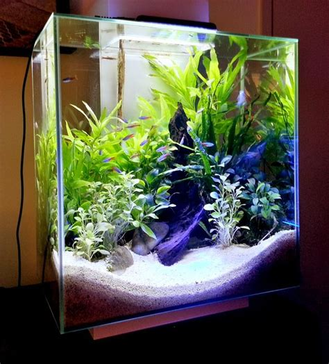 aquascape fish tank fluval edge 12 gallon aquarium aquascape freshwater