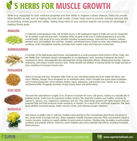 Herbal Food Herbal Foods Remedies 5 Herbs For