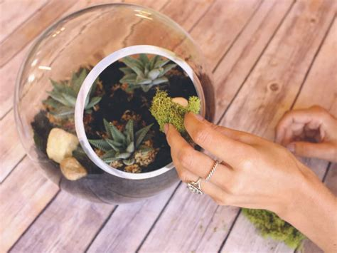 a beginner s guide to making a succulent terrarium world of succulents