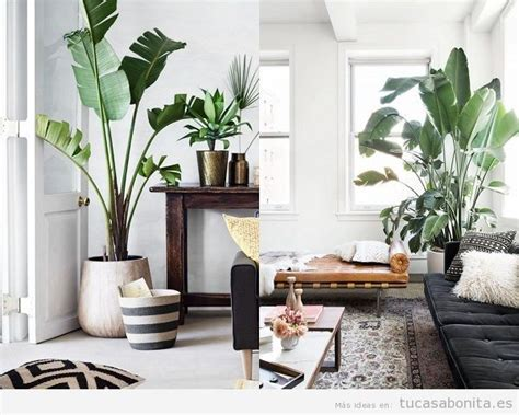 plantas de interior para salon ideas y trucos para decorar tu casa de estilo moderna o