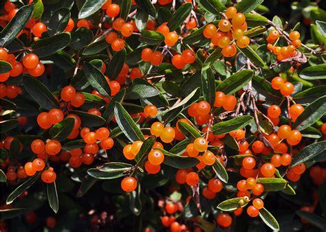 orange flower pavlovas with strawberries recipe dishmaps