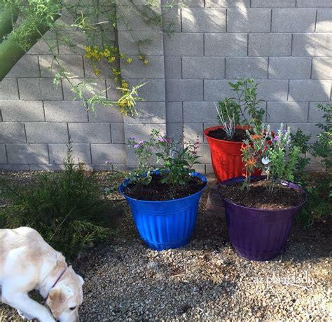 container gardening arizona creating a hummingbird container garden ramblings from a