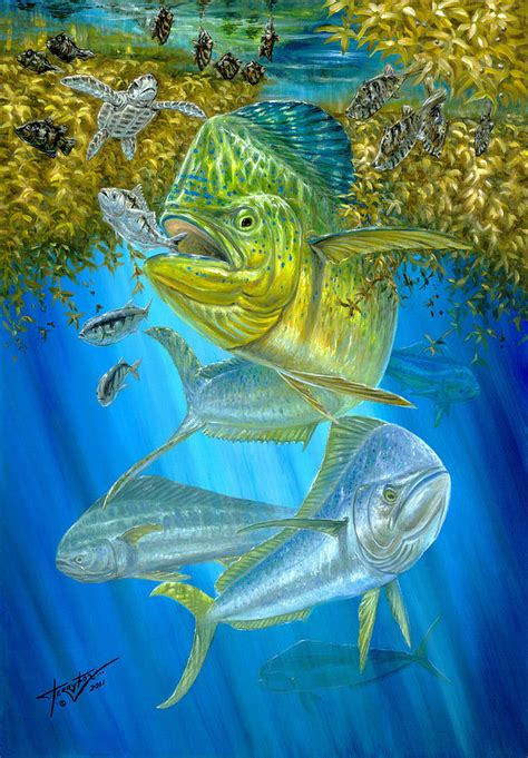 mahi mahi hunting in sargassum painting by terry fox