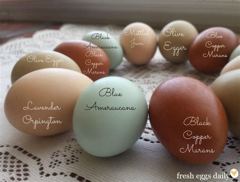 egg colors green city growers egg of a different color quiche