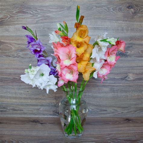 Gladiolen In Der Vase by Gladiolen In Der Vase Richtig Anschneiden Pflegen