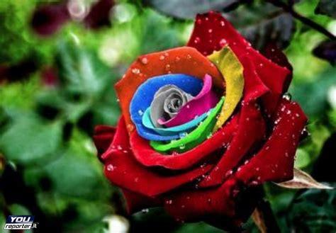 colori fiori primavera fiori colori profumi youreporter it