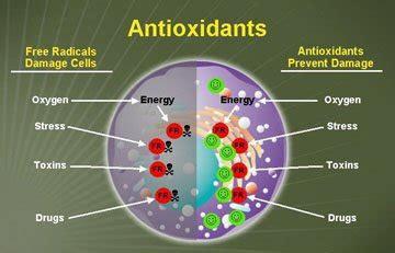 green lady    antioxidant