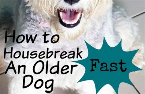 house breaking an older dog how to housebreak an older dog fast dogvills