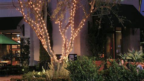 lights to wrap around trees wrap around tree lights house designs