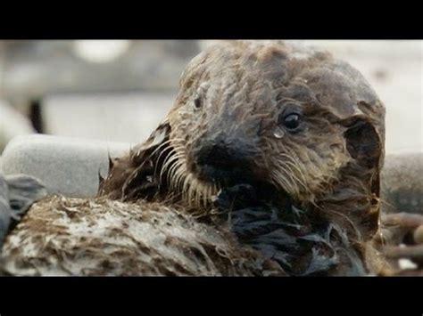 amazing animal babies 1405284285 sweet shell smashers amazing animal babies sea otters ep 7 earth unplugged youtube