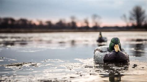 how to your to duck hunt realtree quot the x quot kansas land duck