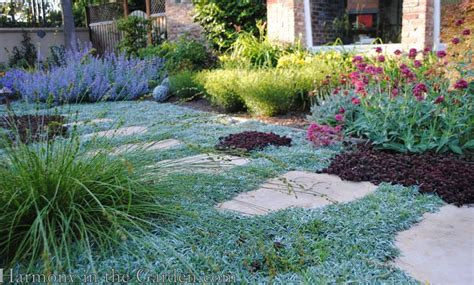 Green Carpet Rupturewort Seeds by Shades Of Gray In A No Lawn Front Garden Harmony In The