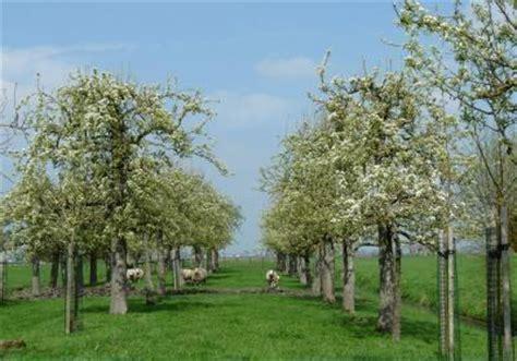 welke fruitboom in de tuin boern logies lekkerbuiten