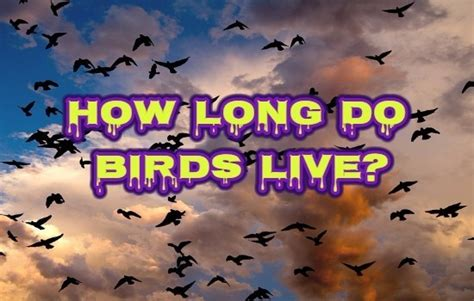 how long do birds live lifespan of birds wondersify