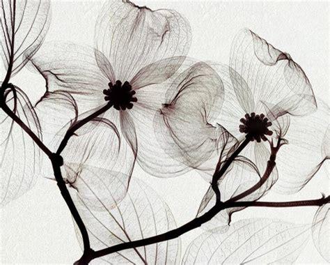 gambar gambar lukisan bunga  indah koleksi